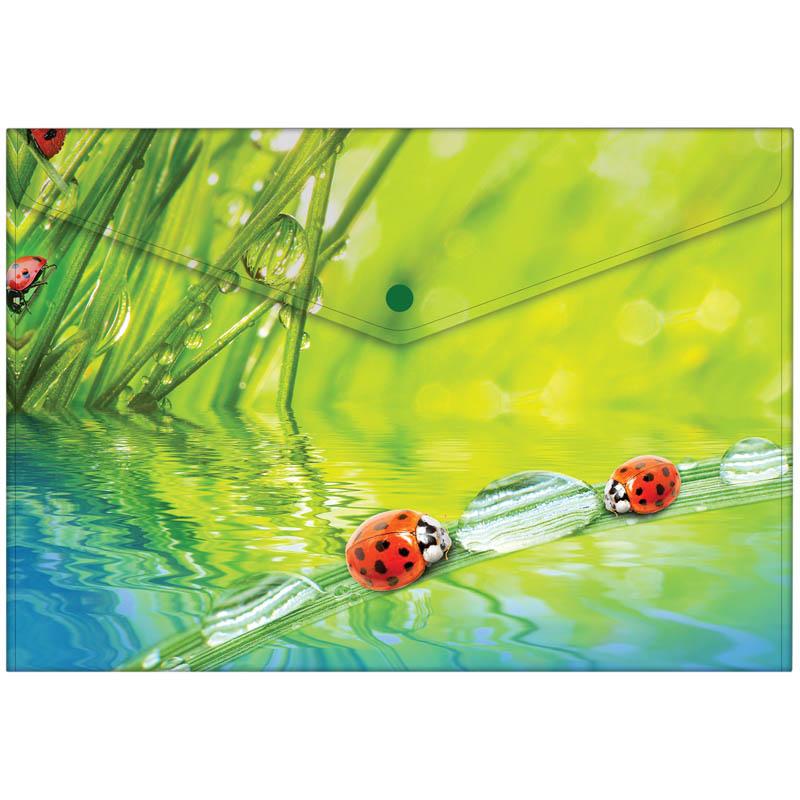 "Папка-конверт на кнопке А4, с рисунком ""Ladybird"" 180мкм, 10шт/уп (Berlingo)"